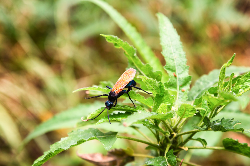 Nameless bug - San Javier Mission