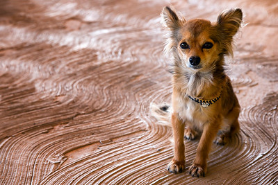 Mexican dog friend