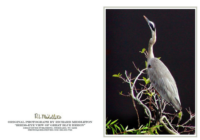 Great Blue Heron<br /> ... a bird's eye view!