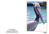 Brown Pelican in breeding plumage.<br /> Now here is a beautiful face!