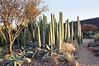 San Miguel de Allende, Gto.- Parque Natural