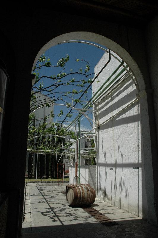 Parras, Coah. Casa Madero. La vid invita.