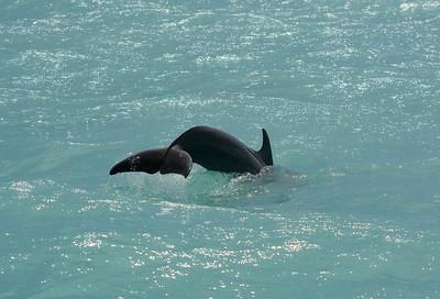 Dolphin - Sian Ka'an Biosphere Reserve