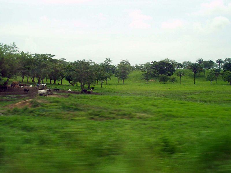 La savana al sur de Veracruz.