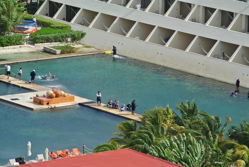 Dolphin show at Dreams resort next to Regency.