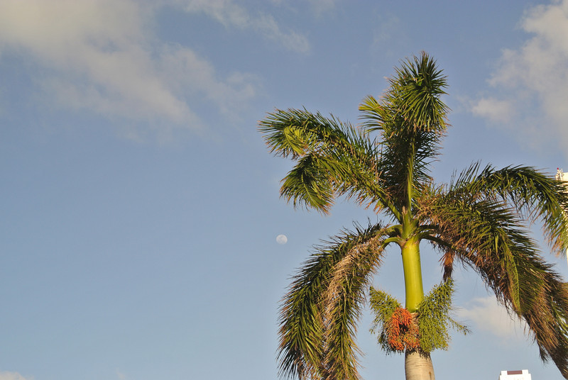 People go coconuts when there is a full moon.