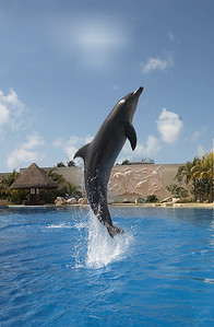 Mexico USA Trip October 2013 Dolphinaris