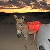 11-14-14_6128_Donkey.JPG