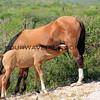 11-16-14_6174_East Cape horses.JPG
