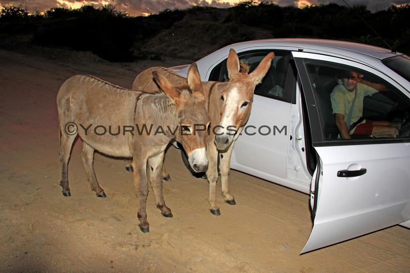 11-14-14_6121_Donkeys.JPG