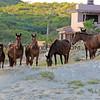 11-15-14_6143_East Cape horses.JPG