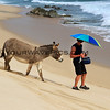 2017-12-06_East Cape_Shipwrecks_Donkey_Tony_22.JPG<br /> <br /> Tony was actually running away from this donkey who was chasing him to get the carrots!