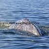 IMG_3391_Magdalena Bay Whales_03-02-2013.JPG
