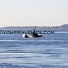 IMG_3371_Magdalena Bay Whales_03-02-2013.JPG