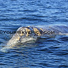 IMG_3415_Magdalena Bay Whales_03-02-2013.JPG
