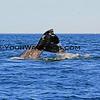 IMG_3398_Magdalena Bay Whales_03-02-2013.JPG