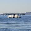 IMG_3372_Magdalena Bay Whales_03-02-2013.JPG