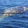 IMG_3416_Magdalena Bay Whales_03-02-2013.JPG