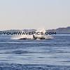 IMG_3373_Magdalena Bay Whales_03-02-2013.JPG