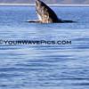 IMG_3377_Magdalena Bay Whales_03-02-2013.JPG