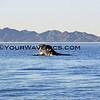IMG_3378_Magdalena Bay Whales_03-02-2013.JPG