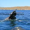 IMG_3424_Magdalena Bay Whales_03-02-2013.JPG