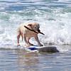 2020-11-08_Cerritos_Surfing Dog_8.JPG