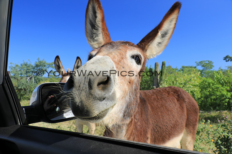 2019-11-13_284_East Cape_Donkeys.JPG
