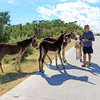 2019-11-13_277_East Cape_Donkeys_Tony.JPG