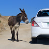2019-11-13_285_East Cape_Donkey.JPG