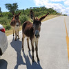 2019-11-13_275_East Cape_Donkeys.JPG