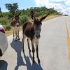 2019-11-13_275_East Cape_Donkeys.JPG