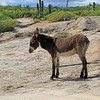 2019-11-13_286_East Cape_Donkey.JPG