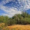 2019-11-07_13_Cerritos_Cactus and Clouds.JPG
