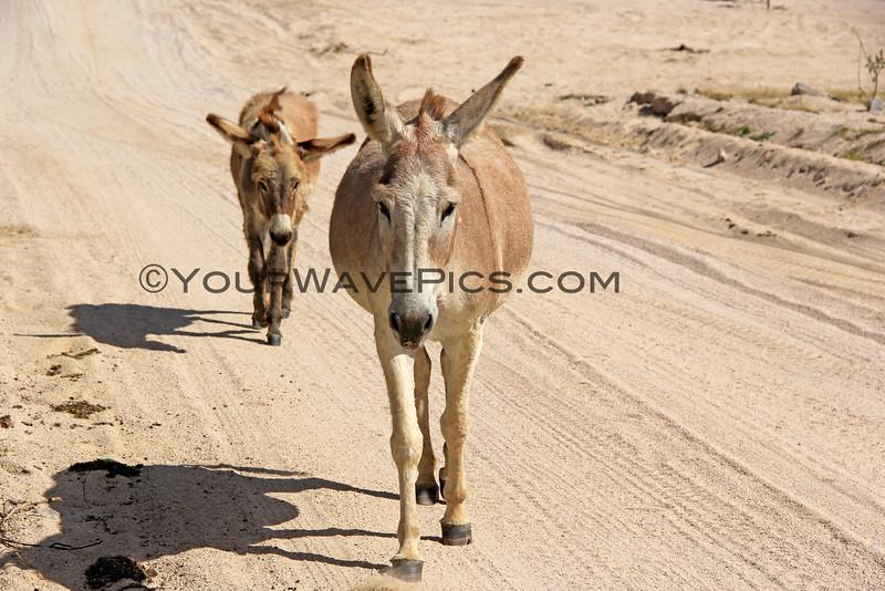 2014-11-17_6291_Donkeys.JPG