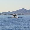 2013-03-02_3384_Magdalena Bay Whales.JPG