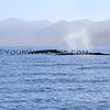 2016-01-25_Magdalena Bay_11_2885_Two whales.JPG