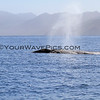 2016-01-25_Magdalena Bay_11_2896_Two grey whales.JPG