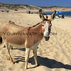 2017-06-07_Shipwrecks_Donkey_4.JPG