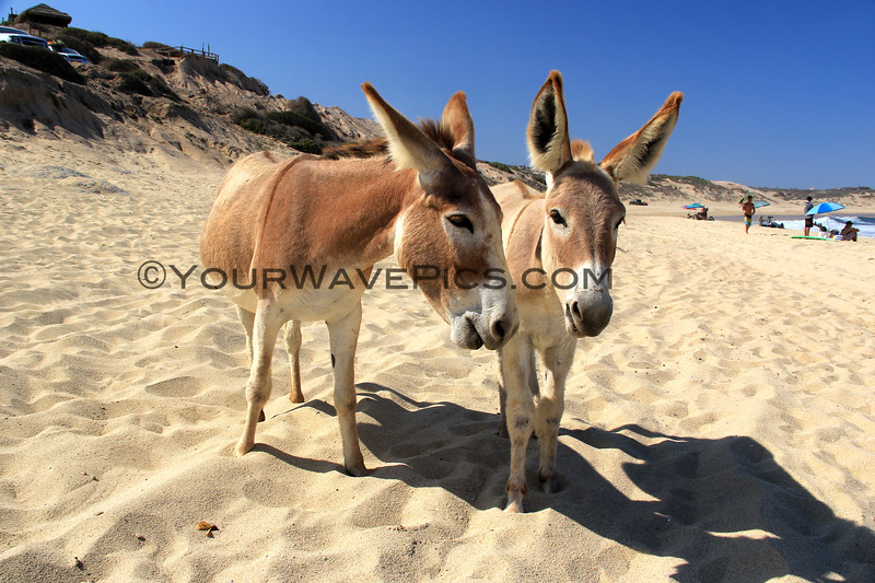 2017-06-07_Shipwrecks_Donkeys_8.JPG