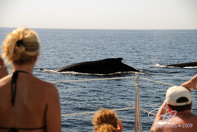 Humpback whales off the port (?) bow!