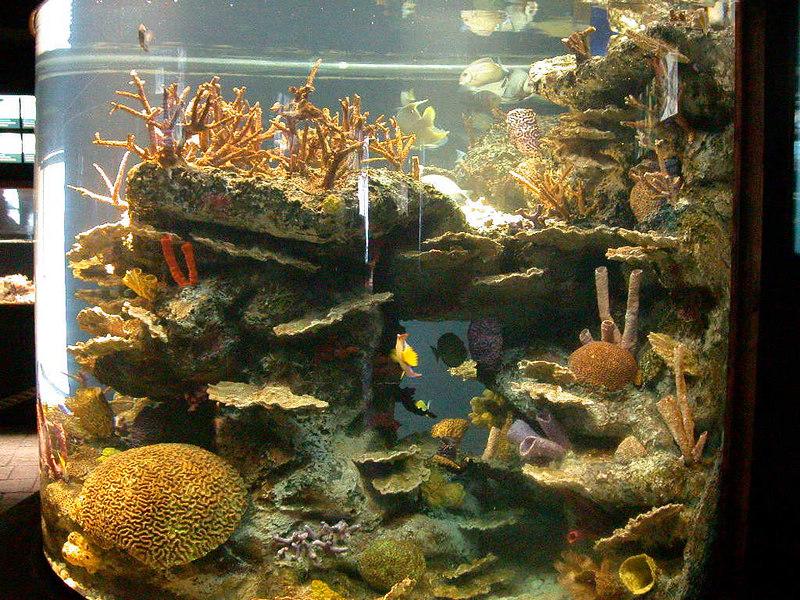 4 Aquarium04