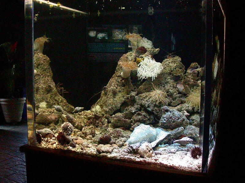 4 Aquarium02