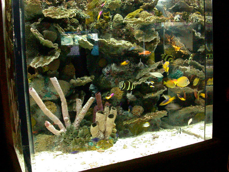 4 Aquarium03