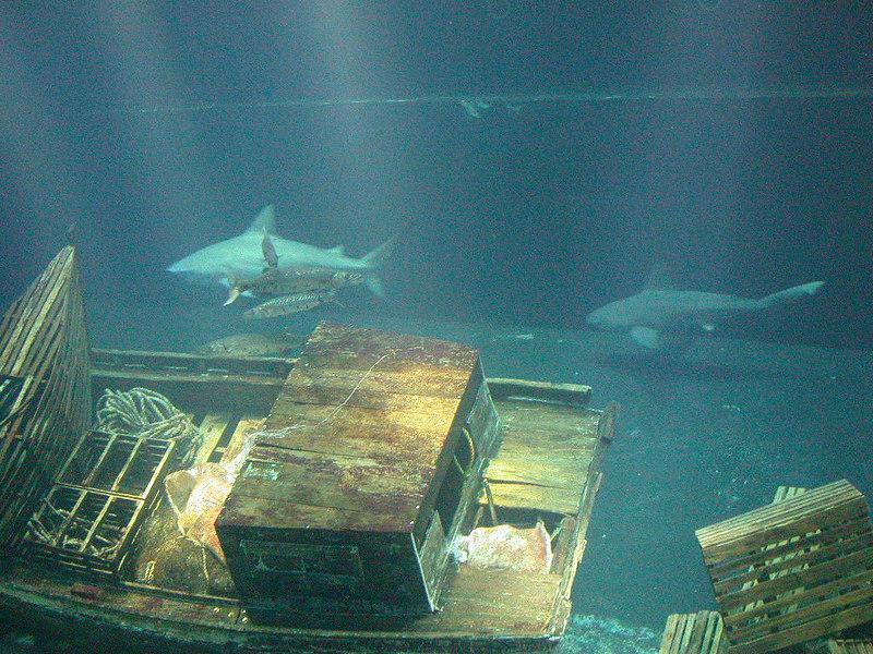 4 Aquarium19