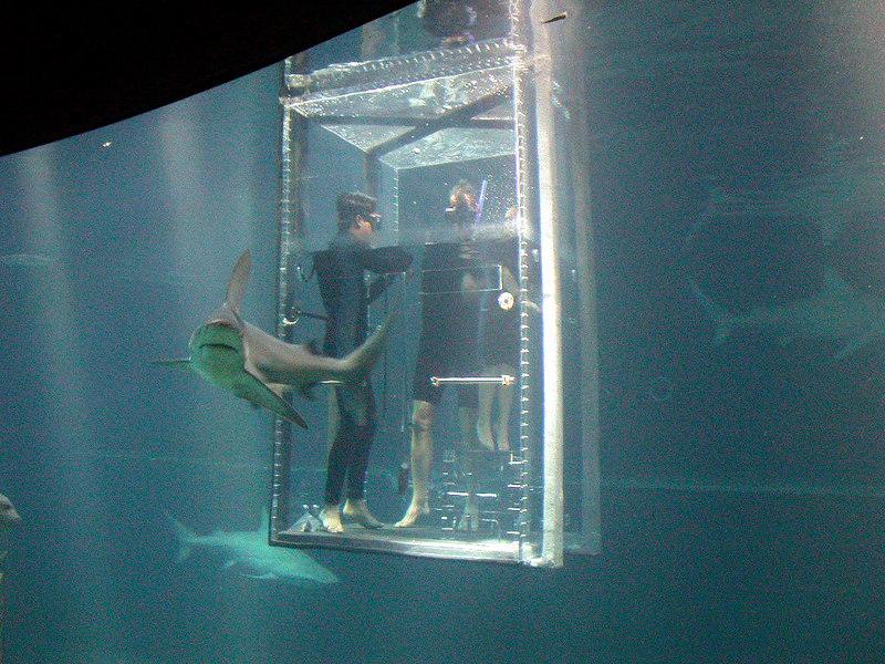 4 Aquarium22