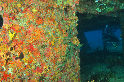 An interior wall covered with colorful sponges.   Barco Hundido:  The C58, also known as General Anaya, is a shipwreck in the waters between Cancun and Isla Mujeres, at a depth of 80 to 100 feet.. The ship is a former US navy vessel used as a minesweeper during World War II – originally named the USS Harlequin -- that passed hands to the Mexican Navy, who later deliberately sunk it in the 1980s to create an artificial reef.     © Joseph W. Dougherty, MD. All rights reserved.