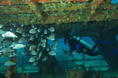 Diver inside C-58 minesweeper wreck, with school of grunts.   Barco Hundido:  The C58, also known as General Anaya, is a shipwreck in the waters between Cancun and Isla Mujeres, at a depth of 80 to 100 feet.. The ship is a former US navy vessel used as a minesweeper during World War II – originally named the USS Harlequin -- that passed hands to the Mexican Navy, who later deliberately sunk it in the 1980s to create an artificial reef.     © Joseph W. Dougherty, MD. All rights reserved.