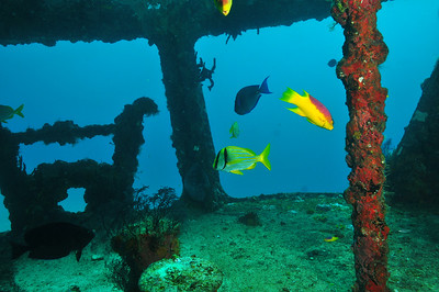 Reef fish have taken up residence on the stern, proving that the artificial reef program is a success.     © Joseph W. Dougherty, MD. All rights reserved.
