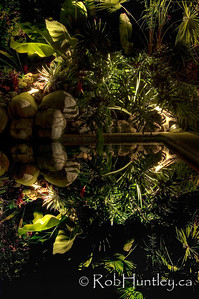 The gardens reflect in the swimming pool at night. Casa Candiles, Ixtapa, Mexico © Rob Huntley